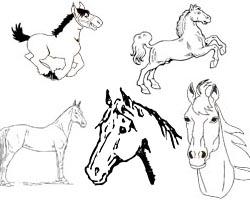 Kostenlose Pferde Malvorlagen