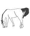 Vorlage grasendes Pferd