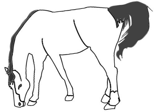 Vorlage grasendes Pferd zum Ausdrucken