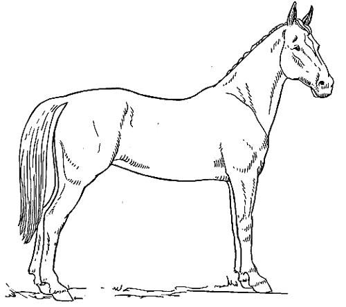 stehendes pferd malvorlage als kostenloses ausmalbild