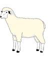 Schaf Malvorlage zum Ausdrucken f�r Kinder