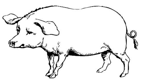 Schwein Malvorlage zum Ausmalen